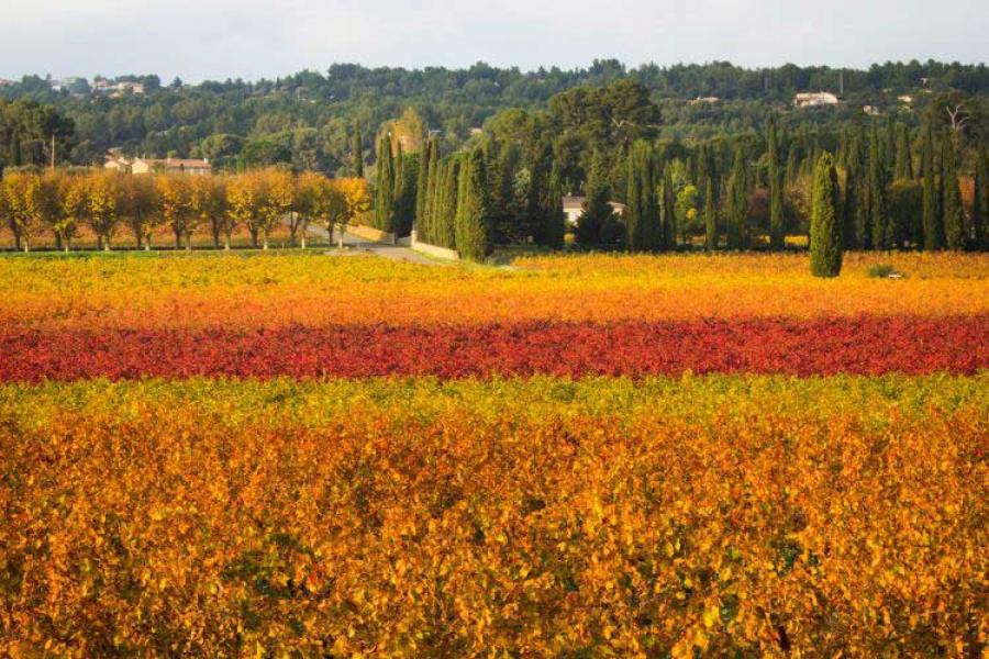 seizoenen-herfst.jpg